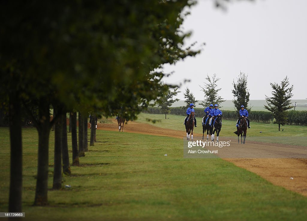 Racehorses from Godolphin make their way to Warren Hill gallops on September 24, 2013 in Newmarket, England.