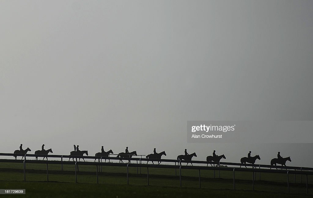 Racehorses make their way down Warren Hill gallops on September 24, 2013 in Newmarket, England.