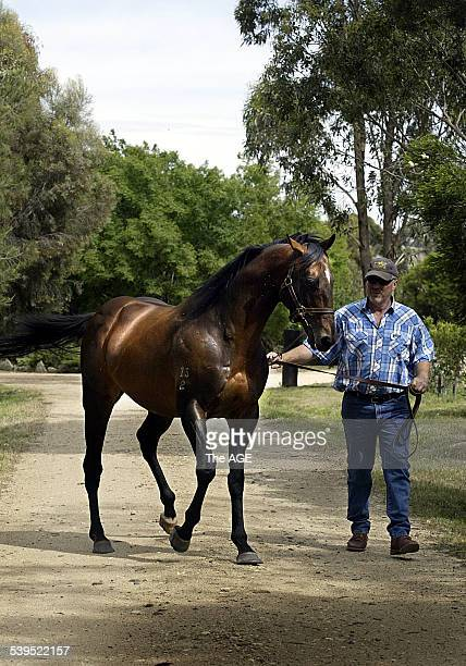 Racing Stallion Principality which stands at Mountmellick stud at Tallarook with Tim Reeve 18th November 2004 THE AGE SPORT Picture by RAY KENNEDY