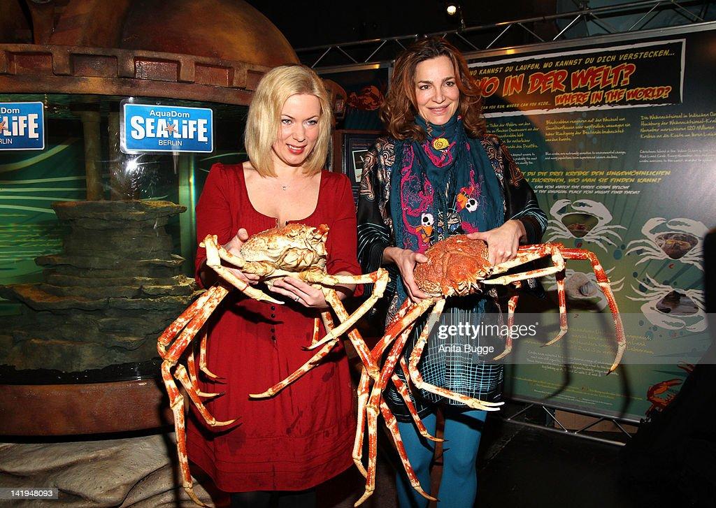 alexandra kamp welcomes spidercrabs at aqua dome sealife berlin getty images. Black Bedroom Furniture Sets. Home Design Ideas