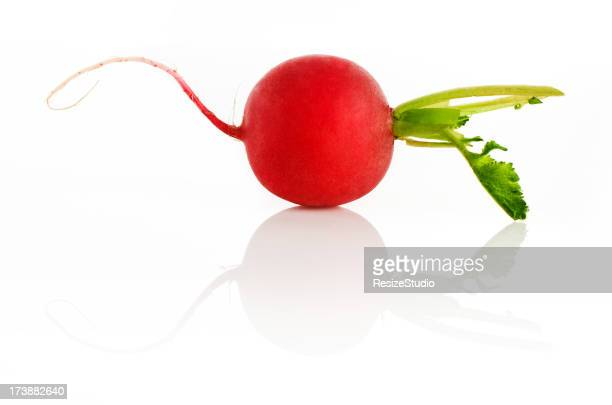 Radish on white background