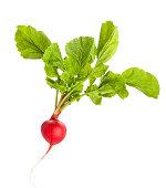 radish isolated