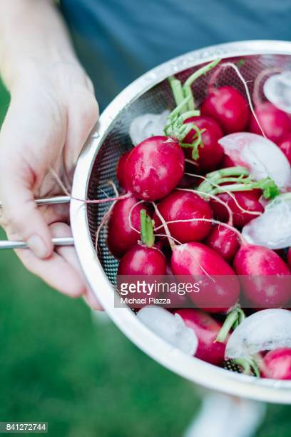 Radishes and Ice in Colander