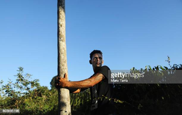 Rafael a small plot farmer prepares to climb a tree in a partially deforested section of the Amazon on June 26 2017 near Alto Paraiso Rondonia state...