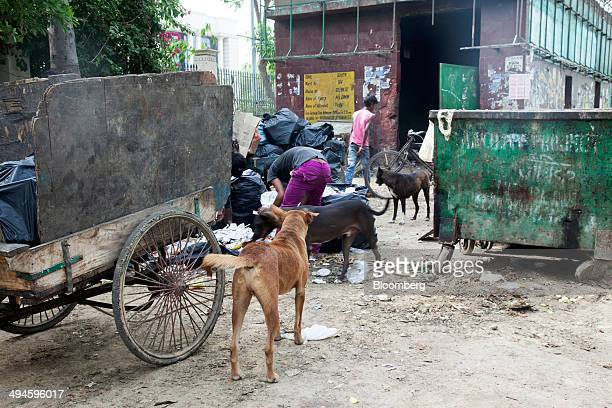 Rag pickers sort through garbage at a dumpster as dogs stand nearby in New Delhi India on Friday May 30 2014 New Delhi whose population will reach...