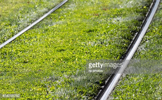 Railroad tracks : Stock Photo