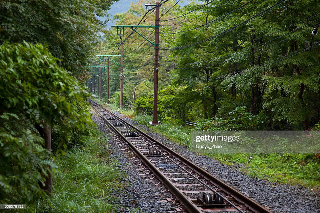 Railway through forest : Stock Photo