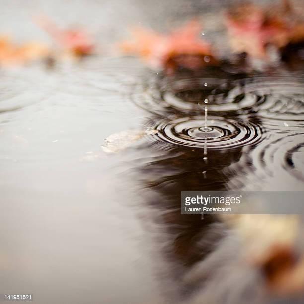 Rain drop in puddle