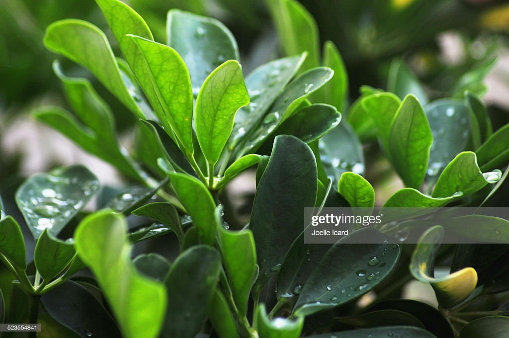 Rain drops on a green plant