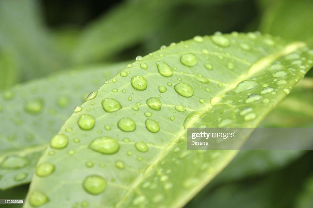Rain drops : Stock Photo
