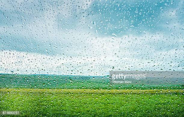Rain drops , Shades of green