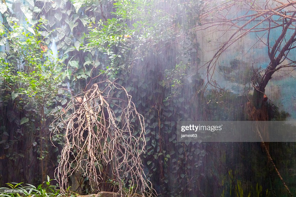 rain forest during a great storm : Stock Photo