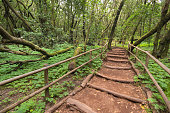 Rain forest in Garajonay national park , La Gomera, Canary islands,  Spain.