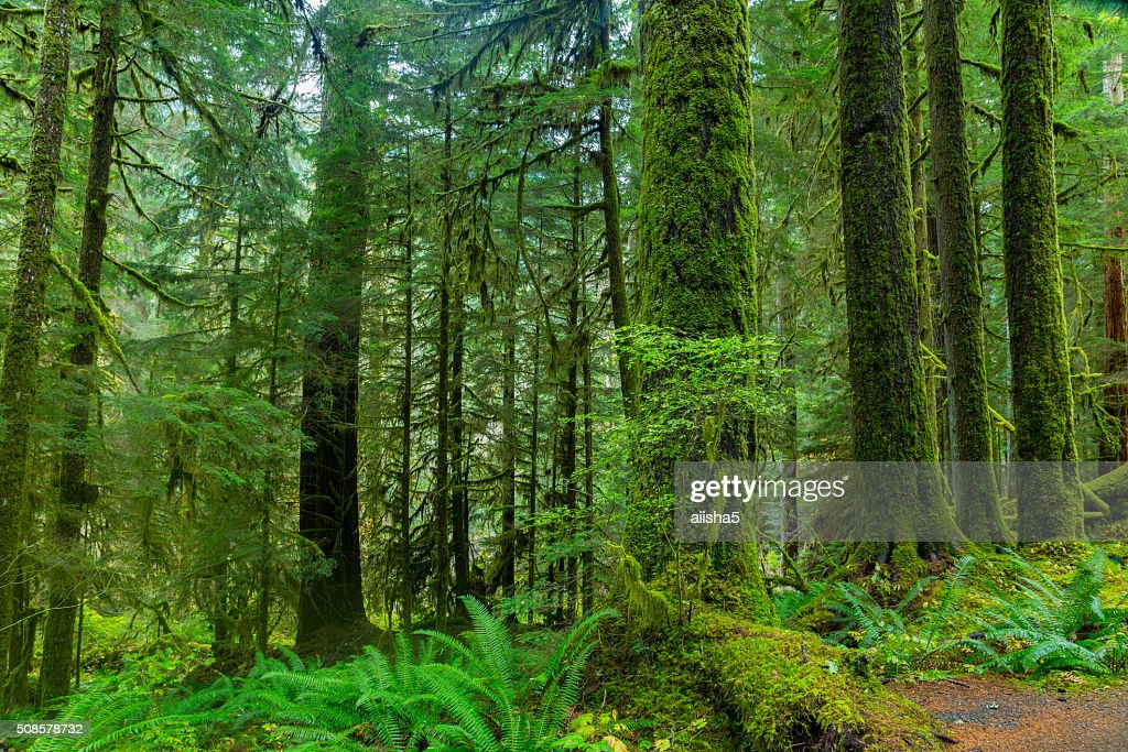 Rain Forest in Oregon : Stockfoto