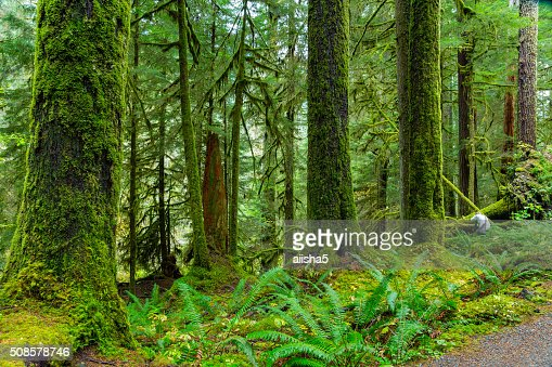 Rain Forest in Oregon : Bildbanksbilder