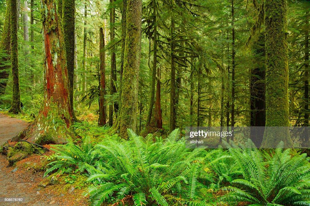 Rain Forest in Oregon : Stock Photo