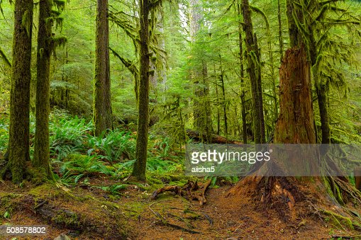 Rain Forest in Oregon : Bildbanksbilder