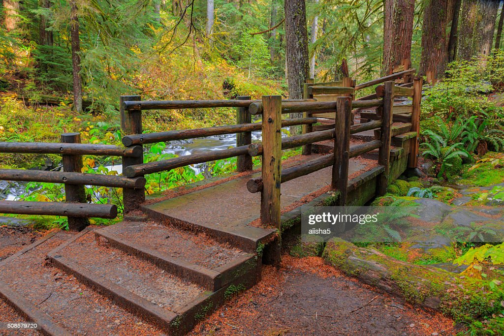 Rain Forest in Oregon : Stock Photo