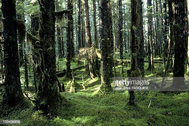 Rain forest in United States South east Rain forest in Glacier Bay National Park Main caracteristic covered by moss due to extreme rain fall