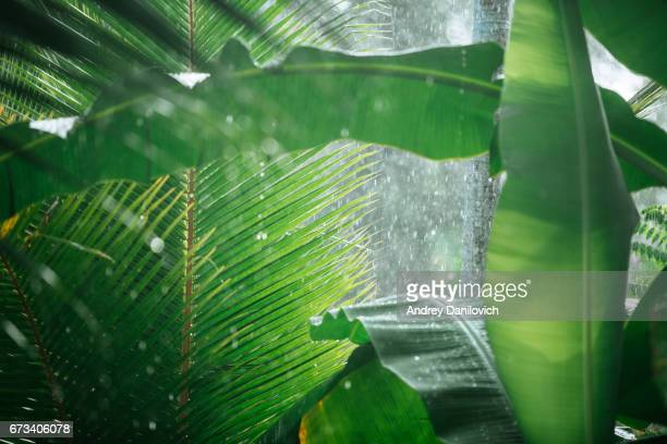 Rain in tropical woods