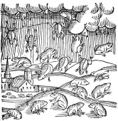Rain of frogs recorded in 1355 Accounts of deluges of frogs and fish date back to biblical times The phenomenon ocurs when a waterspout or tornado...