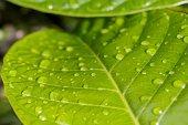 Rain on leaf