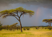 Rainbow and storm clouds, the Serengeti, Tanzania
