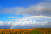 Rainbow appears over Hamakua Coast pasture.