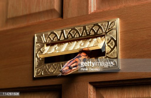 Rainbow boa constrictor through letterbox in door : Stock Photo
