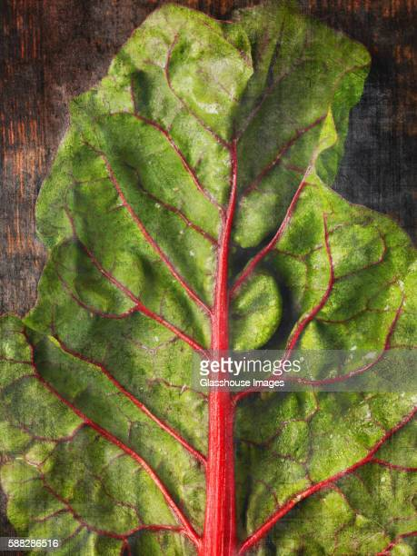 Rainbow Chard Leaf, Close-Up