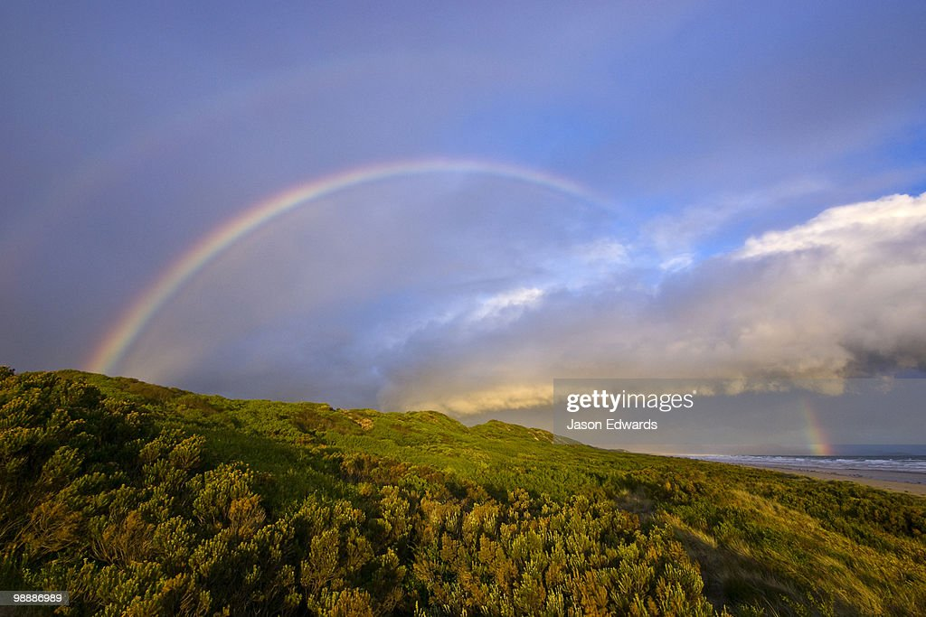 A rainbow crests a sand dune covered in Coastal Heath at sunset. : Stock Photo