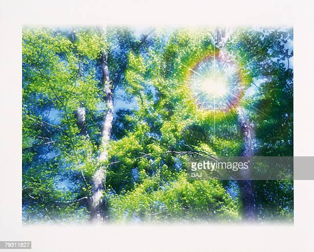 Rainbow in Forest, Low angle view, Composite, Lens Flare
