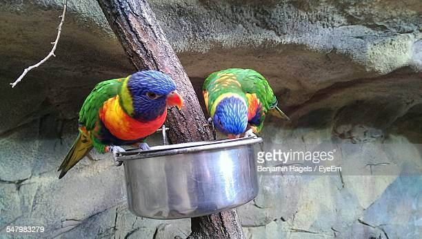 Rainbow Lorikeets Perching On Metal Container At Zoo