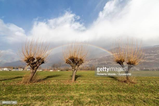 Rainbow on bare trees, Valtellina, Italy