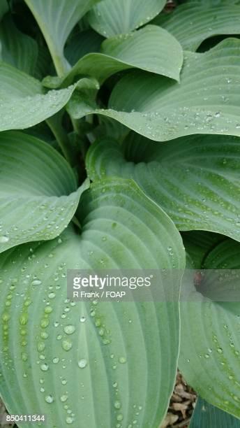 Raindrop on green leaf