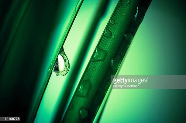 Raindrops on green grass