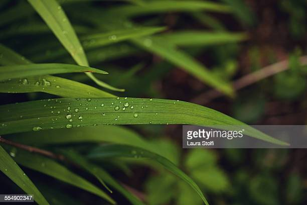 Raindrops on leaves seen from above