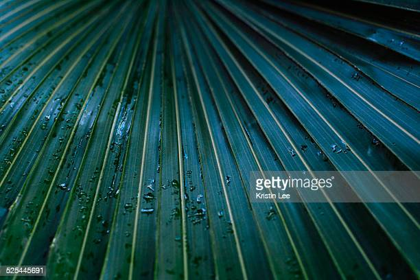 Raindrops on palm leaf