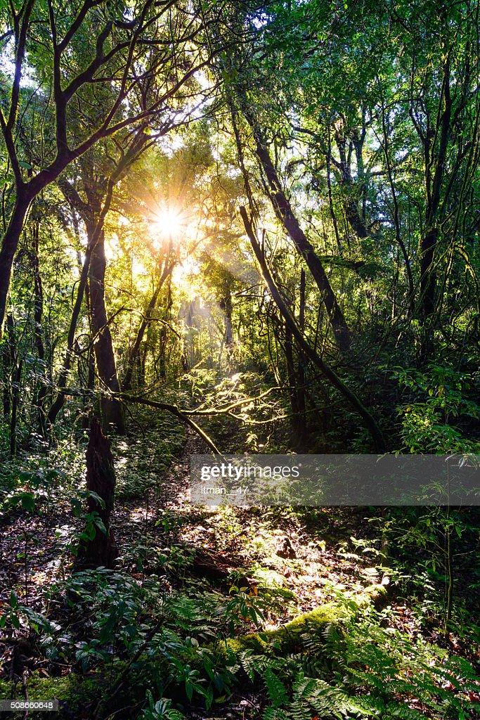 Rainforest at Doi Pha Hom Pok in Chiang Mai, Thailand. : Stock Photo