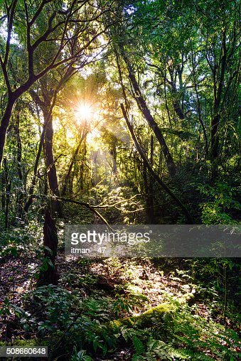 Rainforest at Doi Pha Hom Pok in Chiang Mai, Thailand. : Stock Photo