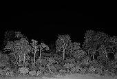 Rainforest at night in Mount Kenya