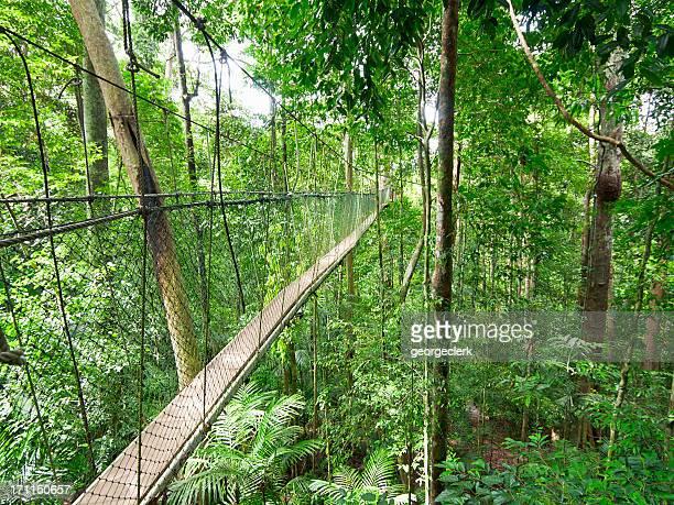 Passerelle la canopée de la forêt tropicale