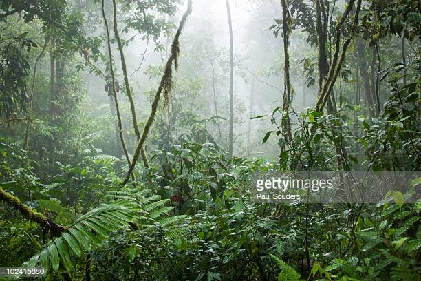 Rainforest, Costa Rica