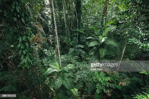 Rainforest from above, Queensland, Australia