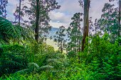 Picture shows an rainforest in Australia.