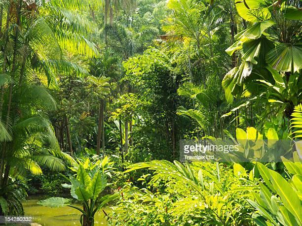 Rainforest interior, Botanical Gardens, Singapore