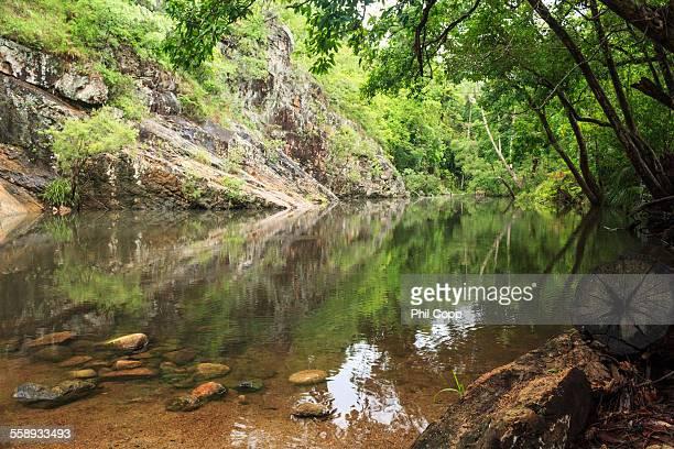 Rainforest Lagoon