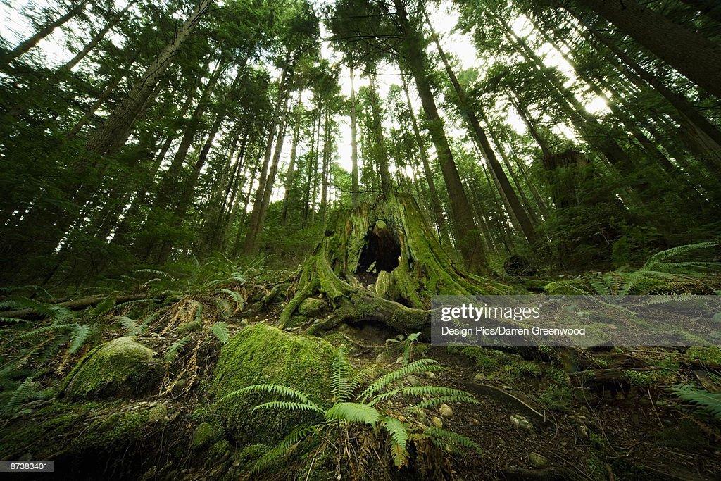Rainforest : Stock Photo