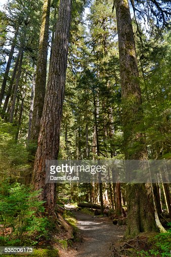 Rainforest Sol Duc area and trail
