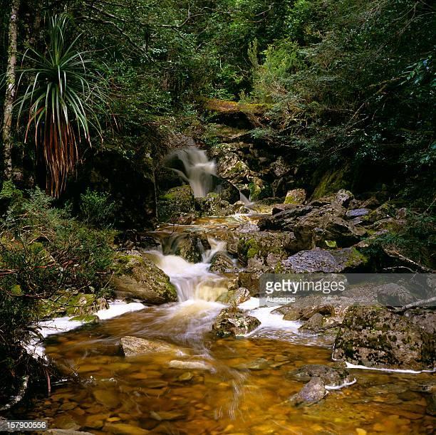Rainforest stream Cradle Mountain Cradle MountainLake St Clair National Park Tasmania Australia